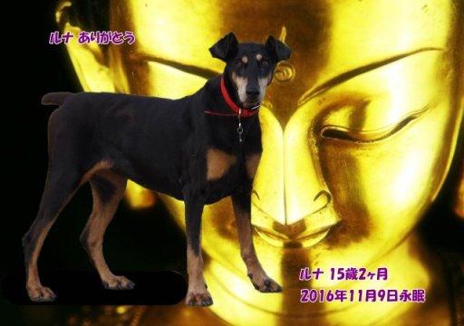 161109tosano-runa-tyan.jpg