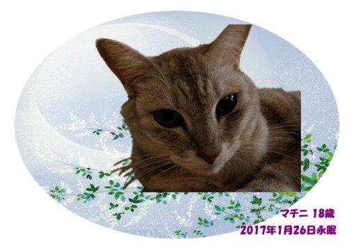 170127toriyama-matini-tyan02.jpg