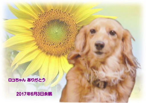 170604nakagawa-roko-tyan.jpg