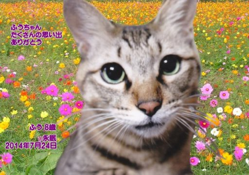 170804siinoki-fuu-tyan140726.jpg