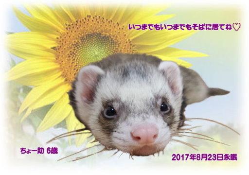170825kawamoto-tyo-suke-tyan.jpg