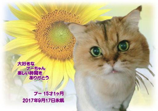 170919nisio-buu-tyan.jpg