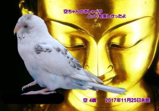 171125tosano-kuu-tyan17.jpg