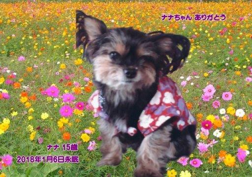 180108doi-nana-tyan.jpg