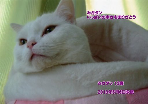 180507nakayama-mikatann-tyan.jpg