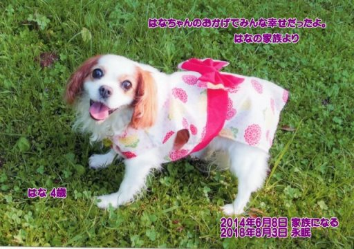 180804motono-hana-tyan.jpg