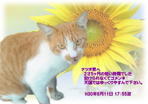 180812tumura-natuo-tyan.jpg