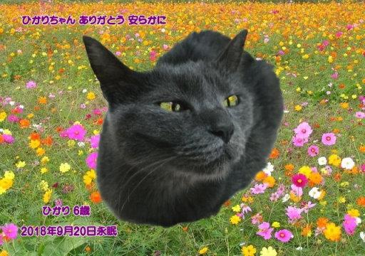 180922ikegami-hikari-tyan.jpg