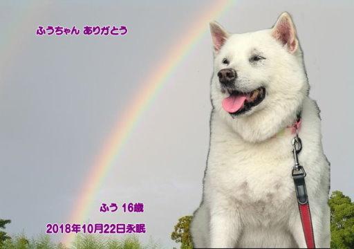 181022takeda-fuu-tyan01.jpg