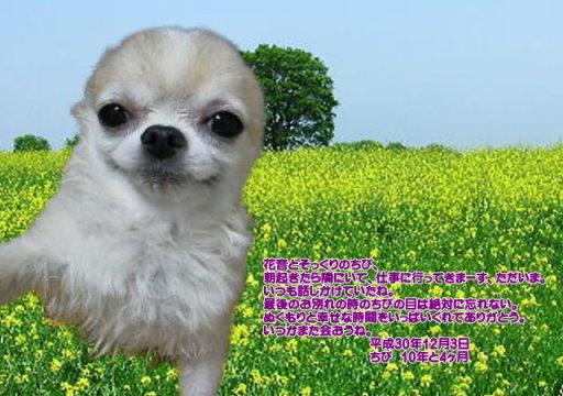 181204ookawa-tibi-tyan.jpg
