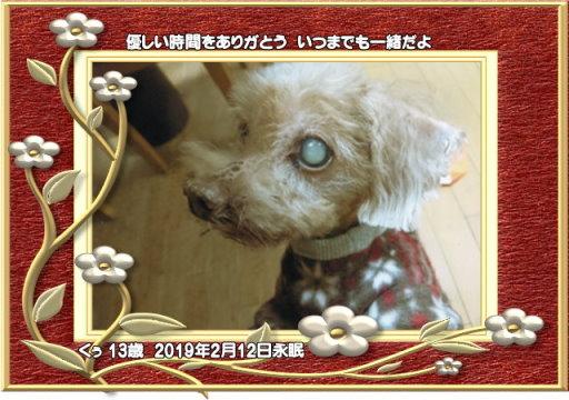 190214yamasaki-kuxu-tyan.jpg