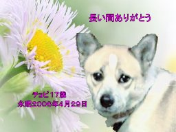 chobi-tyan02.jpg