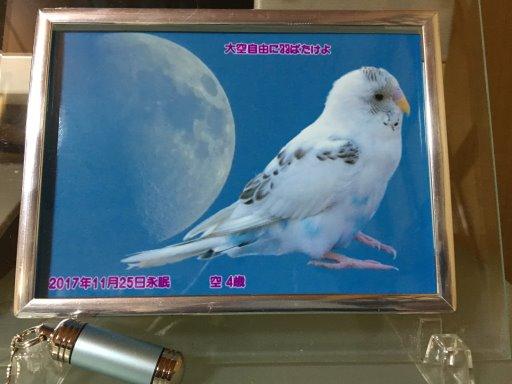 kuu01.JPG